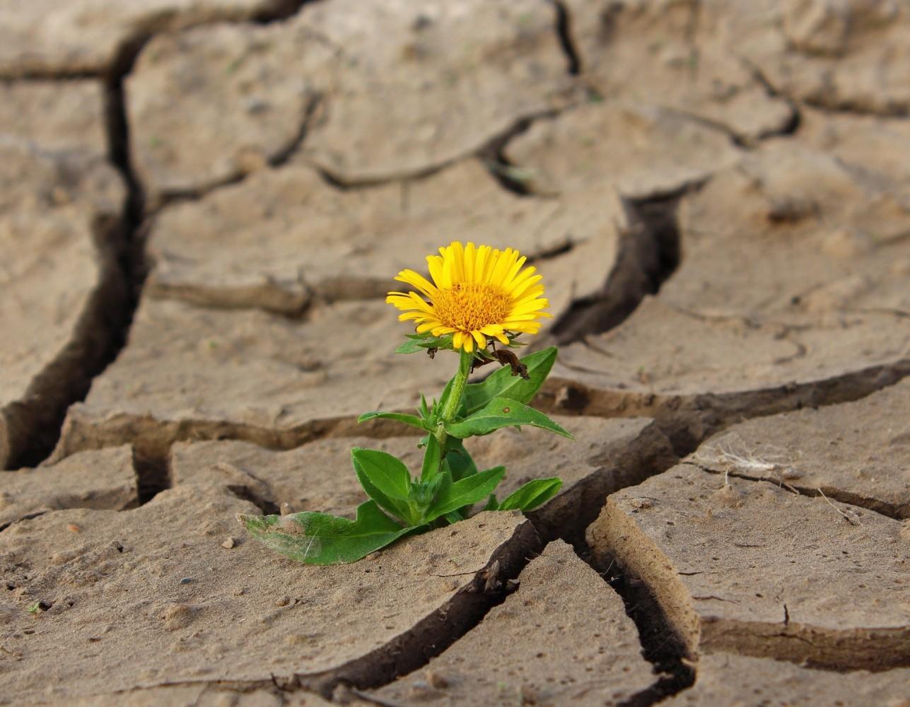 Changement climatique : comment réagir ?